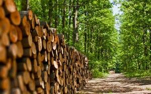 stackedwood
