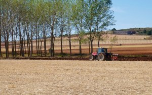 Windbreak in field with tractor